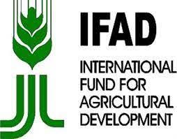 Enugu State now hub of 2 staple crops –IFAD