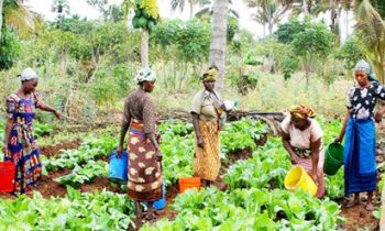 Kogi, Lagos And Four Others To Benefit From World Bank's Agro Processing, Productivity Project